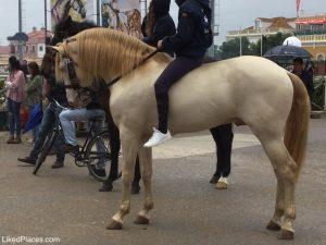 Feira da Golegã cavalo dourado com cavaleiro sem sela com transeuntes na rua