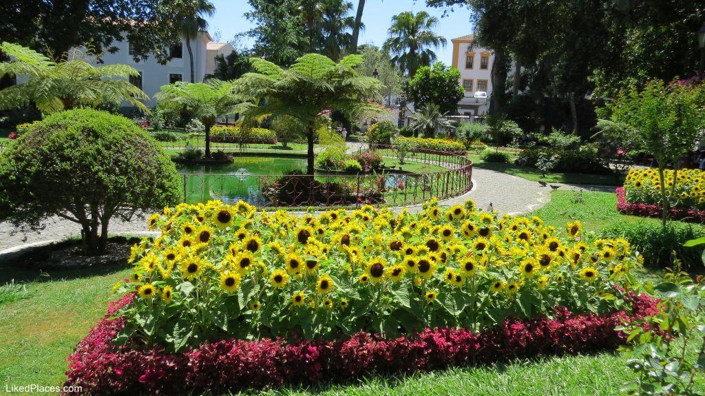 Sunflowers in the Duque da Terceira Garden, Angra do Heroísmo