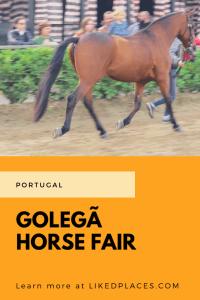 PIN Golega horse fair