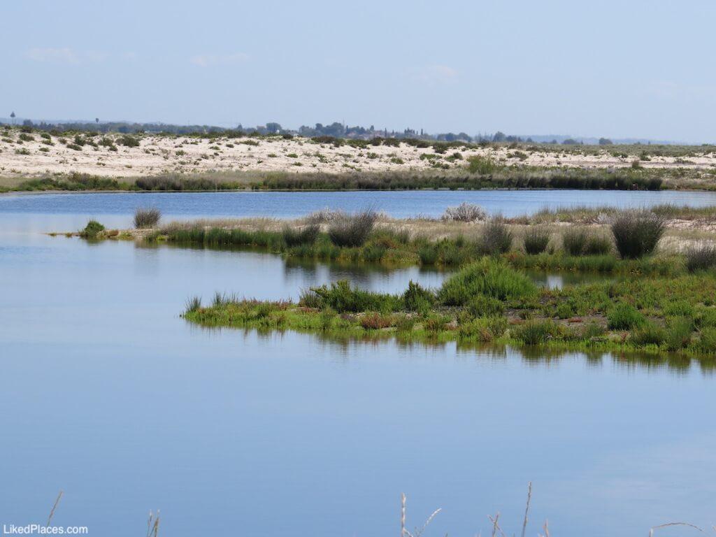 Habitat Ria Formosa Sapal