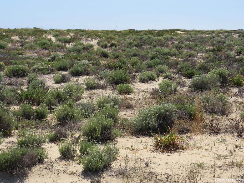 Vegetacao ilha deserta faro