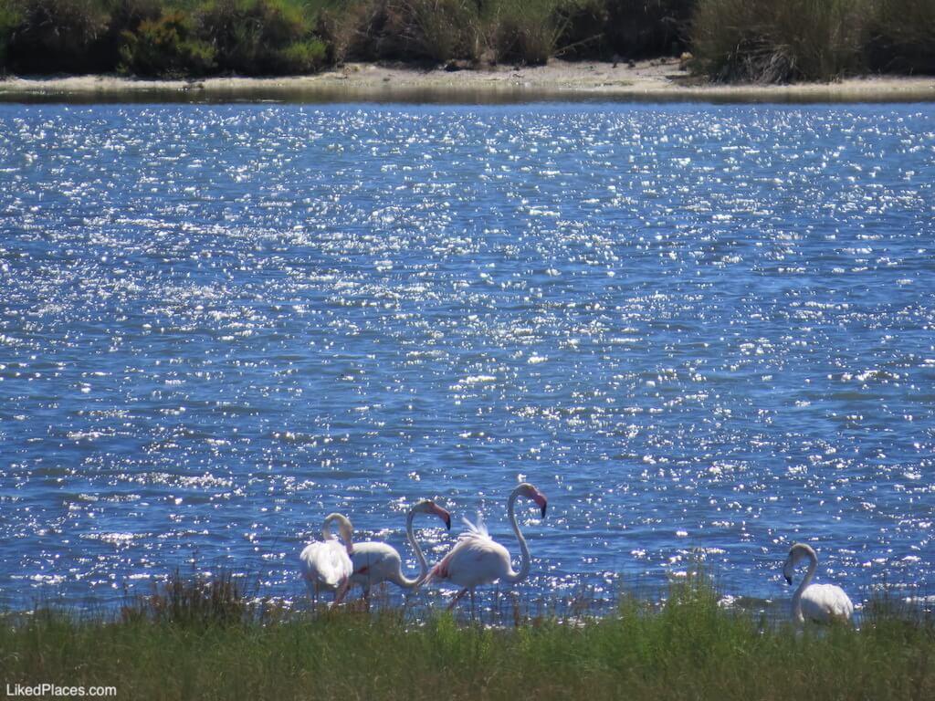 Flamingos Reserva Natural Sapal Castro Marim e Vila Real de Santo António