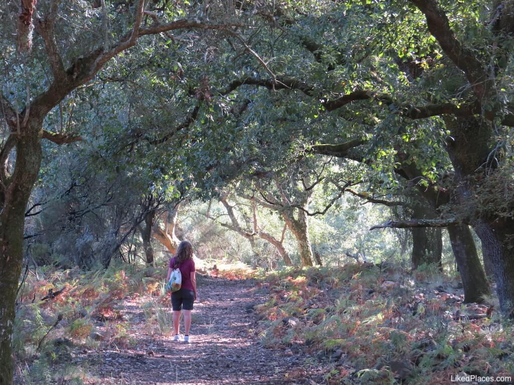 Tapada da Mafra Caminho pertencente ao Percurso de Vermelho