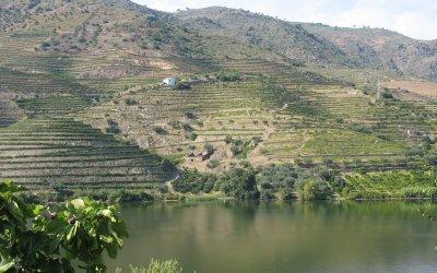 Norte Rio e Vinhas no Douro